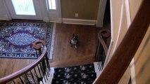 The Smartest Dog: Marli the Boston Terrier