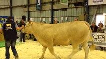Vente aux enchères de six vaches à viande