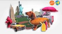 Elige tu raza - Teckel / Perro salchicha - Más que perros y gatos 6