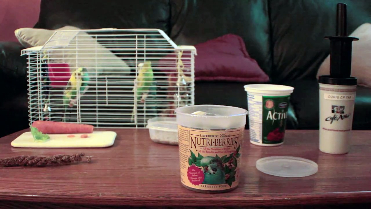 Healthy Eating For Your Budgie