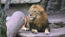 ライオンリッキーの誕生日