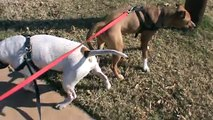 """Eli Johnson Rant #3.. Off leash """"good dogs"""" and careless owners."""
