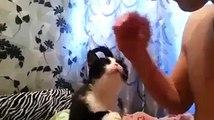 İlgi bekleyen sevimli kedicik
