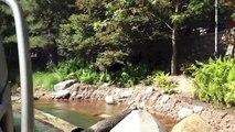 Disney California Adventure: Grizzly River Run