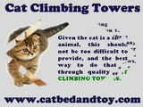 Cat Climbing Towers | Why Cats Need Them.