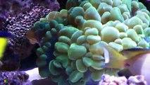 Aquarium Récifal 2300 litres