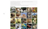 Learning About History Matters! 'How to' Grupedia - Picture Encyclopedia of Domesticated Animals