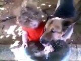 Sevimli köpek ve sevimli çoçuğun su içmesi