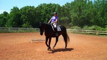 Training level. Walk/trot/serpentines. Contact for the 7th time! Training level S4 dressage