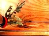FIRE RETARDANT COATINGS for Dry Grass, Wildfires, Brush Fires & Christmas Trees