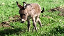 The Sound of a donkey - video dailymotion