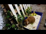 Kaninchen - Gehege einrichten,Stall bauen (Kaninchen Haltung, süß Hase lustig)