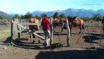 Gauchos argentinos / Caballos criollos en El Calafate / Argentine horses, cowboy, turismo, travel