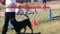 PERFECT DOG OBEDIENCE SCORE | SIT MEANS SIT DOG TRAINER