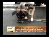 Caught on cam: Hero dog kills snakes