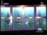 PGT's Rosenrei like dancing fish -- Ai Ai