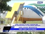 CebuPac flight cancelled after bird strike