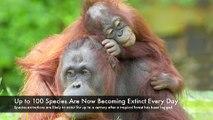 Rainforest Rescue - Saving Rainforest Forever
