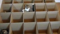 9 chats jouent à cache-cache dans des boites en carton