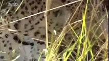 Discovery Channel Animals | Discovery Channel Documentary | Bear Documentary #2015 HD