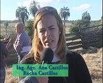 """Resultados de las validaciones de engorde de cerdos para industria en Castillos"""""""