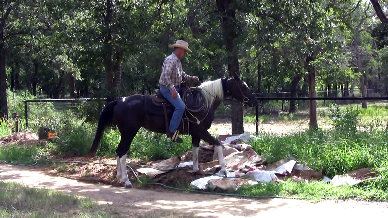 Colt Starting Training Under Saddle – first 20 sessions – Circle D Ranch LLC Dallas DFW TX