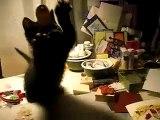 Tsuki loves tags