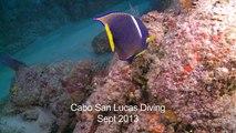 Cabo San Lucas Diving Sept 2013