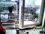 Taijo und Kenji und der Frühling - Zwei schwarze Kater und ihr Catwalk auf dem Balkon