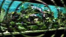 Aquarium 3000L de Cichlidés du Lac Malawi