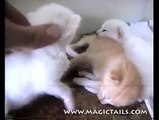 Cute Kittens Opening Eyes for the 1st Time - Soy's Rainbow Kittens pt 4
