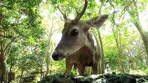 HÁBITAT 7 - Recuperación y Aprovechamiento de Fauna Silvestre