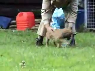 Fun puppy training 7 weeks