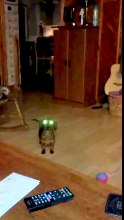 Princess Leia the Mini Dachshund in -Get your SPOOKY on!-