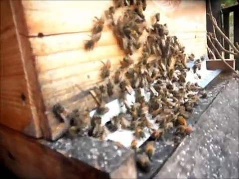 How To Prepare Honey Bee Hives For Winter