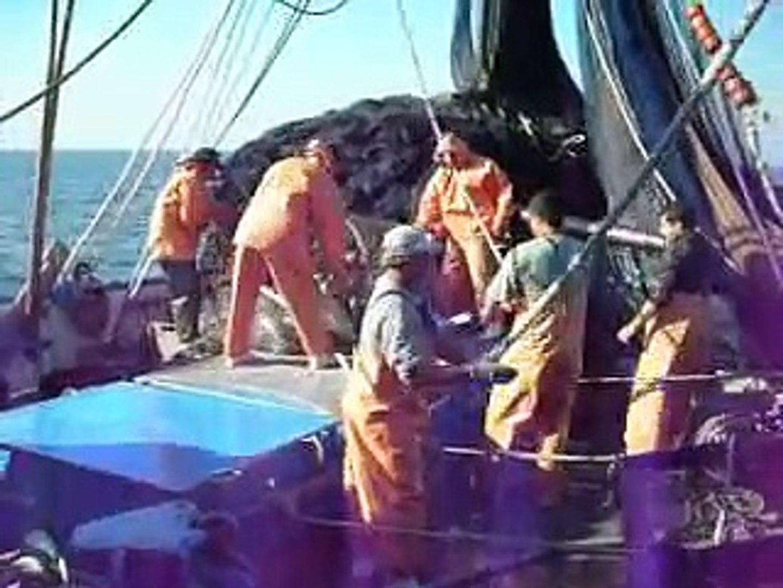 pesca da tainha marilia 1