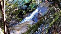 WALK 2 - LEURA CASCADES - BLUE MOUNTAINS VIDEO - CASCADES & SCENERY - CANON SX130
