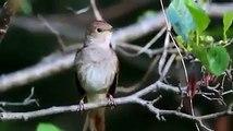 Muhteşem bir şey :)SubhanAllah...Bir Kuştan Kaç Farklı Ses Çıkar?| http://bit.ly/OL-Der-ve-Olur