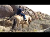 Henry Fjord - 2006 Fjord/Quarter Horse Cross Dun Gelding in Southern Idaho