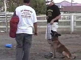 Police Dog Training Video –  K9 dog training