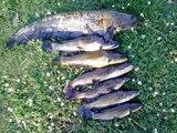Pêche Brochet Sandre Silure ... (58)