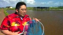 Hawaiian Grown TV - Romy's Kahuku Prawns & Shrimp - Romy's Kahuku Prawns & Shrimp Farm