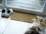 Cute Persian kitten, Sequoia Wants Out! 02.06.10