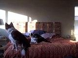 STUPID DOG TRICK #86 (Dog Berry Alarm Clock)