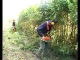 jurawebtv_social_adapemont_emplois-verts-reportage