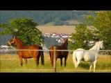 Lucky Horse Ranch,Pferde,Horses,Cavalli,Konie,Caballos,лошади,koně,atlar,