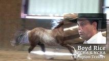 DealNWithACoolCat AQHA, NCHA Cutting Horse Stallion