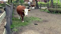 animal mix animal compilation Cow donkey farm animals