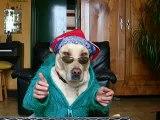 funny dog rappig - labs still can talk -mon chien qui rappe