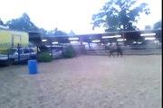 Calm Bred Foundation Quarter Horses
